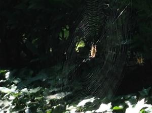 web.jog