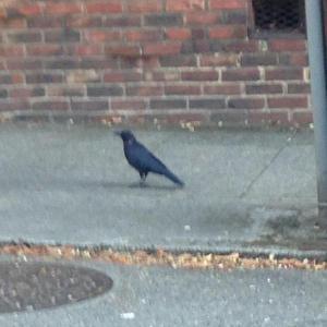 crowpose
