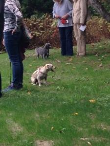 Inuksuit-dogs